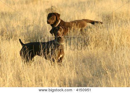 Bird Hunting Dogs