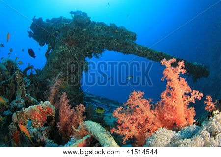 Coral and Artillery gun on SS Thistlegorm shipwreck, Egypt