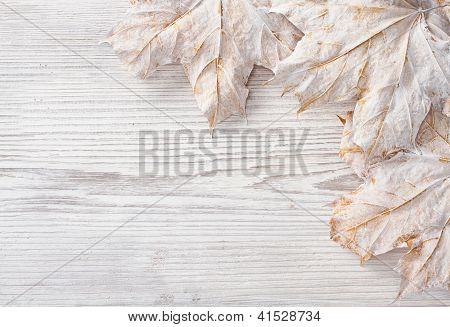 White Leaves Over Wooden Grunge Background. Autumn Maple