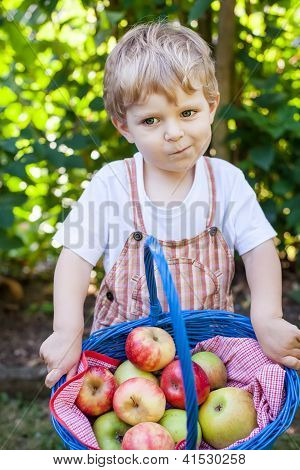 Cute Little Boy with apple basket in summer
