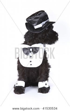 Black Russian Terrier Puppy Dog Butler on White Background