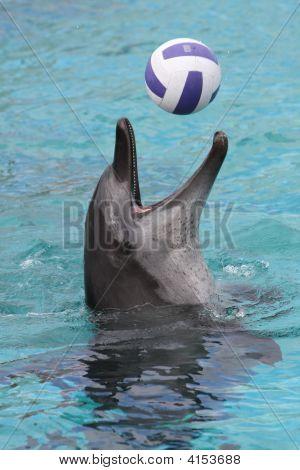 Jogo de bola de golfinho