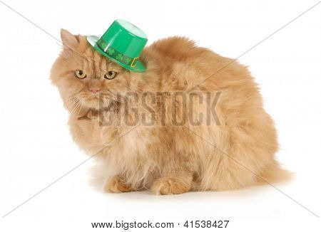 St Patricks Day cat looking at viewer isolated on white background