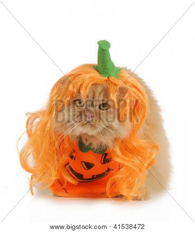 halloween cat dressed up like a pumpkin isolated on white background