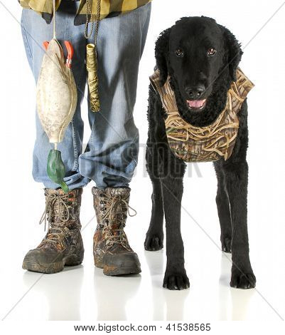 hunting dog -man hunter and curly coated retriever isolated on white background