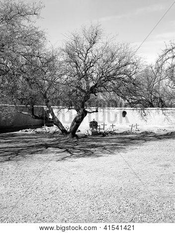 Cemetery At Tumac�cori Mission
