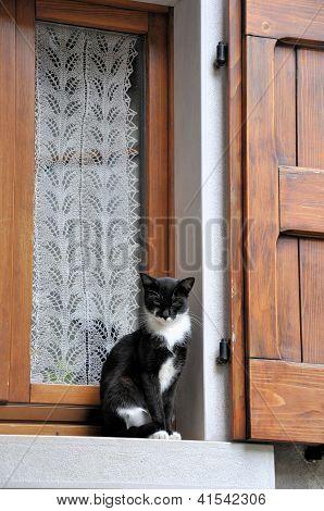 Gato y ventana