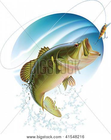 Largemouth bass é pegar uma mordida e pulando com spray de água. Ilustração em vetor em camadas.