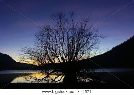 Sunset And Nursing Tree
