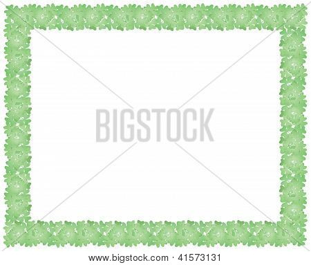 Frame Made Of Shamrock