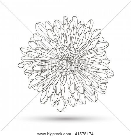Hand-drawing floral background. Vector flower chrysanthemum. Element for design.
