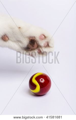 Cat Paw Marble