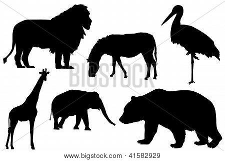 Que es una silueta de animales - Imagui