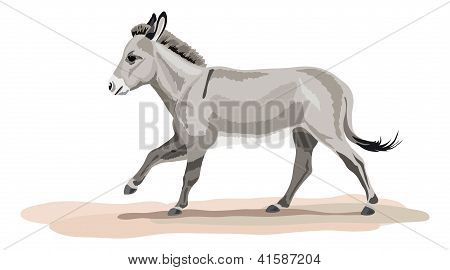 galloping donkey