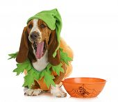 foto of beside  - halloween dog  - JPG