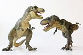stock photo of prehistoric animal  - A Tyrannosaurus Rex Pair Face Off Against a White Background - JPG