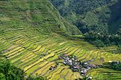stock photo of ifugao  - Rice terraces in Batad valley in the Philippines - JPG