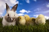 stock photo of yoke  - Chick in bunny - JPG