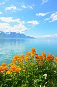 stock photo of montre  - Flowers against mountains and lake Geneva from the Embankment in Montreux - JPG