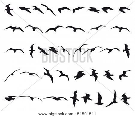 Forty seagulls flying black silhouettes