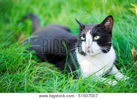 Cute black cat lying on green grass lawn, shallow depth of field portrait