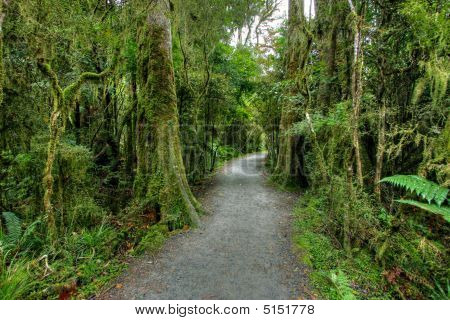Rainforest Landscape