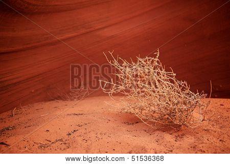 Tumbleweed In Canyon