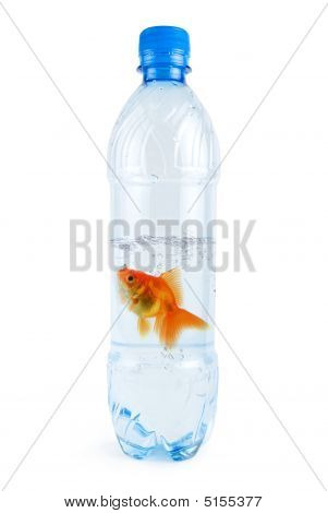 Gold Fish At Water Bottle