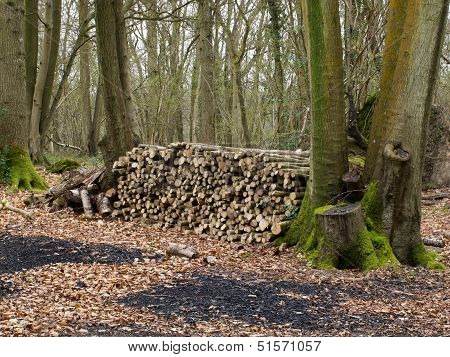 Logs For Charcoal Burning