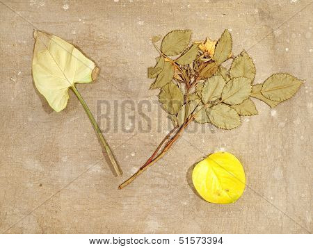 Autumn Herbarium On A Old Dirty Canvas.
