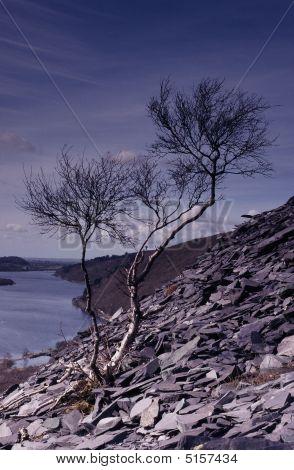 Tree, Slate And Sky