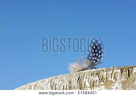 Small Woodpecker Feather On Birdbath
