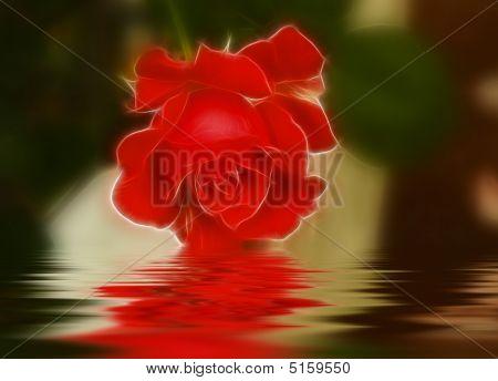 Orange Fractilus Rose