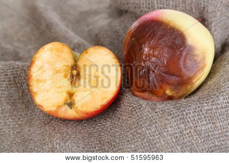 Rotten apples on sackcloth
