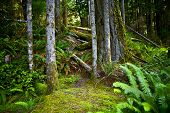 stock photo of plant species  - Oregon Forest Theme - JPG