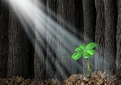 picture of prosperity  - Discover opportunity and prosperity finding success as a business concept with a green four leaf clover growing in a dark forest helped by beams of bright sunlight shinning on the symbol and icon of fortune and luck - JPG