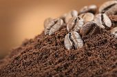 pic of coffee grounds  - coffee beans closeup on bunch coffee grounds - JPG