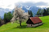 picture of early spring  - Scenic view on the house next to the pasture on mountains background - JPG