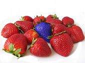 picture of peculiar  - Red strawberries with a blue one - JPG