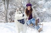 stock photo of wolf-dog  - Wintertime fun with dog - JPG