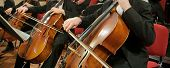 stock photo of cello  - Panoramic composition of Cellos in an Orchestra