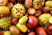 stock photo of beechnut  - Closeup of acorns conkers horse chestnut cases and beechnuts in autumn colour - JPG