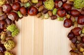 Border Of Natural Fall Material - Acorns, Horse Chestnuts, Beechnuts And Cobnuts