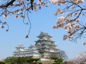 stock photo of shogun  - Restored Himeji samurai castle in Japan with cherry blossom - JPG