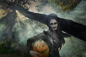 stock photo of dracula  - Halloween concept - JPG