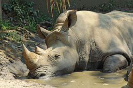 picture of wallow  - A white or square - JPG