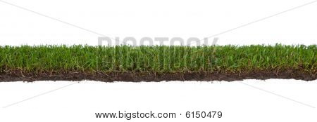 Grass With Roots And Dirt