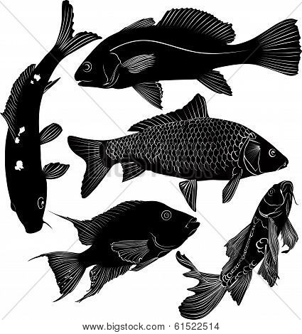 collection of fish