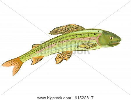 Grayling, Salmon-predatory Fish