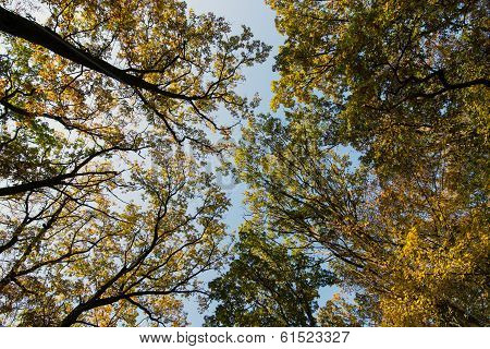 Various Autumn Treetops With Sky